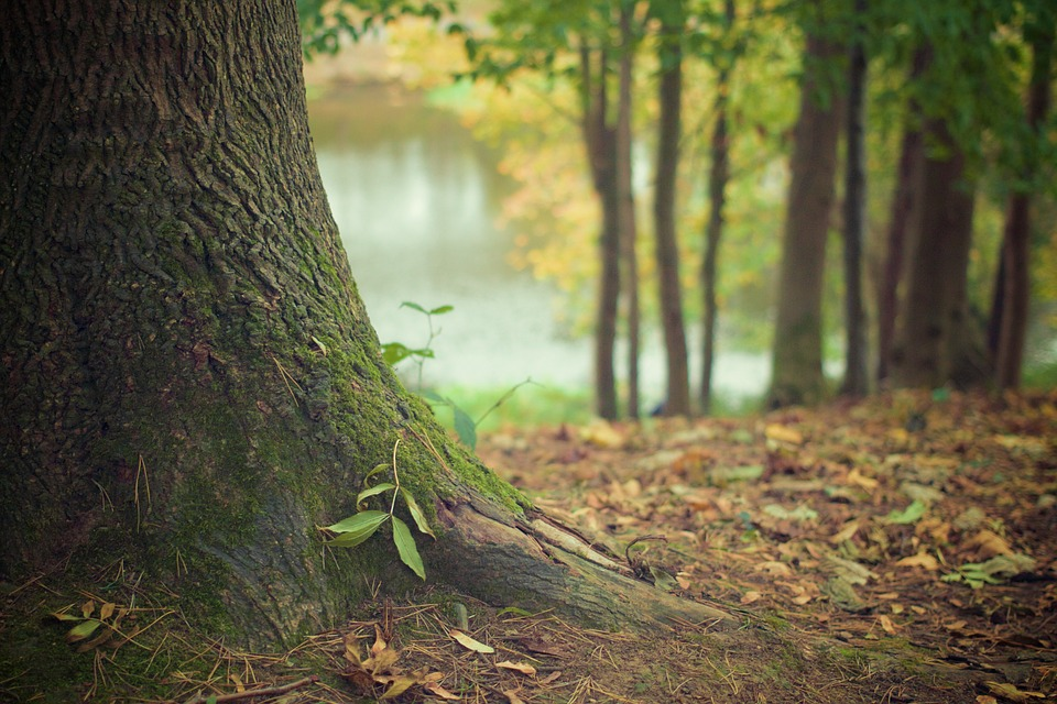 Forêt Pixabay