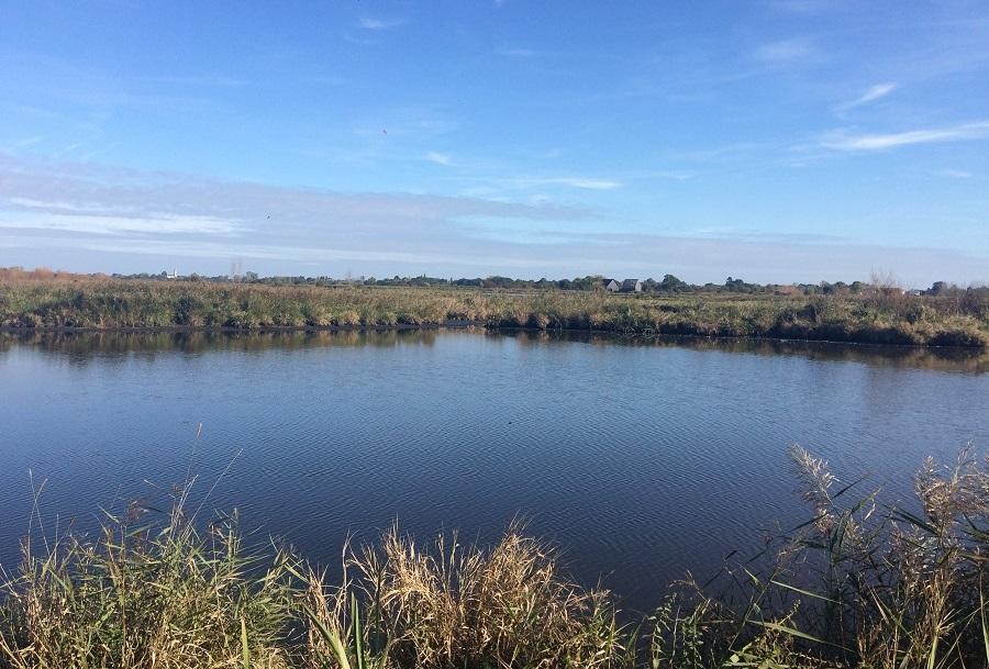 Marais zones humides